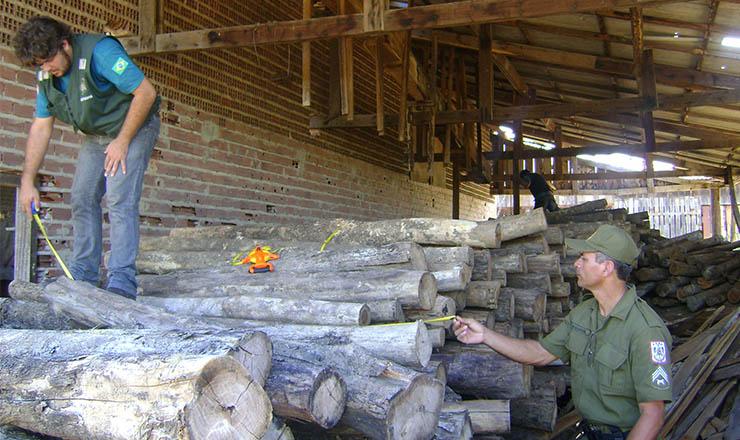 <strong> Operação Ventania 2 </strong> combate ação ilegal de madeireiros no Pará