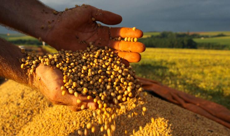 <strong> Grãos desoja:</strong> seu óleo é um dos principais componentes do biodiesel