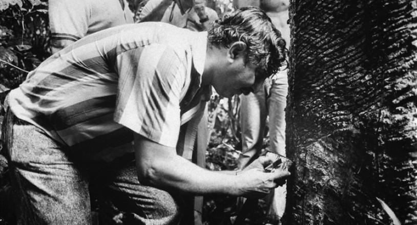 <strong> Chico Mendes colhe l&aacute;tex</strong> de seringueira em Xapuri, no Acre